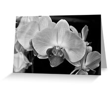 """""""Even though the world is filled with confusion, when I gaze at one orchid I can forget all my problems"""". - Song Sunam Greeting Card"""