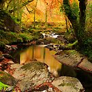 Autumn Stream by Michael  Browne