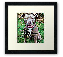 Pit Bull Rescue Beauty Framed Print