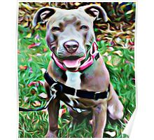 Pit Bull Rescue Beauty Poster