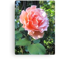 A Rosy Glow Canvas Print