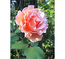 A Rosy Glow Photographic Print