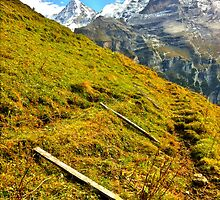 Cow fences down for the winter, Wengen Switzerland by David Galson