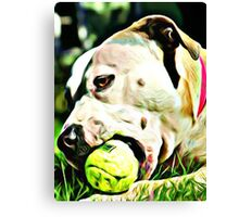 Pit Bull Rescue Beauty Canvas Print