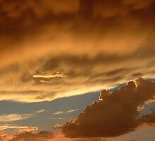 Nature's Gold Series - No. by JDToomer