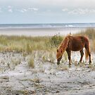 Ponies of Assateague Island by Monte Morton