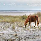 Pony On The Beach by Monte Morton