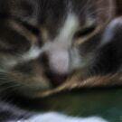 Button Naps by michaelasamples