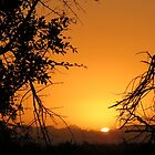 Sunrise in the Bushveld by Elizabeth Kendall