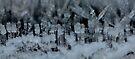 Ice Forest  by Jocelyn  Parry-Jones