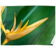 Yellow Lines on Soft Green Leaves Poster
