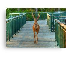 Deer Crossing Canvas Print