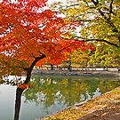 The Autumn Beauty of Hyangwonji by TonyCrehan