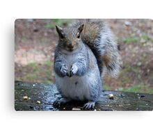 The Smiling Squirrel  Canvas Print