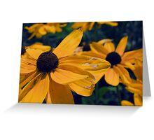 Black Eyed Susan Flowers Greeting Card