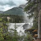 Athabasca Falls by Dyle Warren