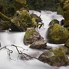 Marion Creek, Fiordland by craftybadger