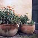 Potted  Spring by Lynda Heins