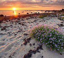 Beautiful searocket by Remo Savisaar