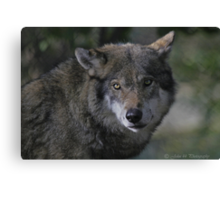 Call of the Wild V  Canvas Print