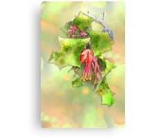 Holly Grevillea Canvas Print