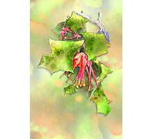 Holly Grevillea Photographic Print