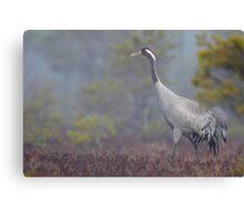 Common Crane Canvas Print