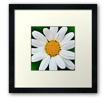 Summer flower Framed Print