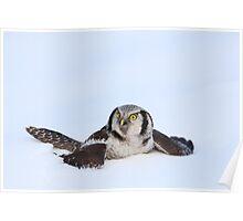 Hawk Owl Poster