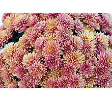 Abundance of Flowers Photographic Print