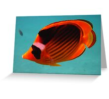 Butterfly fish (yellow and black) Greeting Card