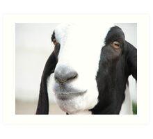 Georgie Goat Art Print