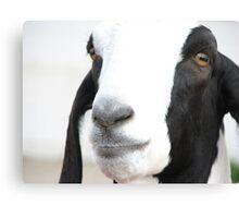 Georgie Goat Canvas Print