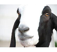 Georgie Goat Photographic Print