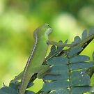 Lizard in a Memosa Tree by JeffeeArt4u