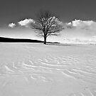Winter is Comin' by photosbytony