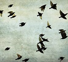 Let's fly by Anne Staub