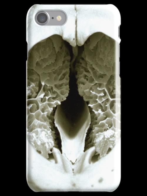 Badger's Brains by Rob Fenn