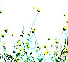 Queen Anne's Lace Field - Yellow by violinist