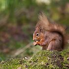 Red Squirrel in May sunshine by Jane Horton