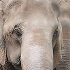 Asian Elephants by FesterLover