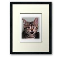 Cute kitten (Tyger) smiling Framed Print