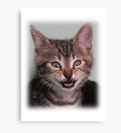 Cute kitten (Tyger) smiling Canvas Print