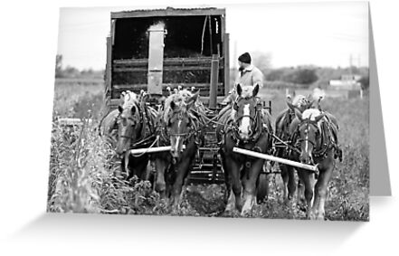 Cutting Silage 2 B&W by mcstory