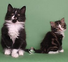 Two cute kittens by Christopher Ware