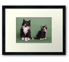 Two cute kittens Framed Print
