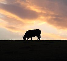 Sunset cow by RFK C