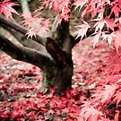 Westonbirt Arboretum by Josephine Pugh