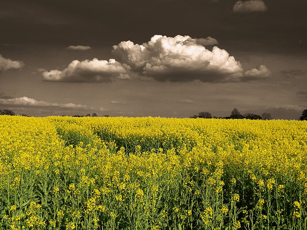 Before the Harvest by DavidWHughes