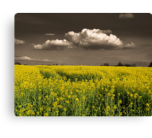 Before the Harvest Canvas Print